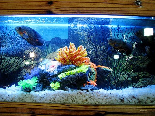akvárium a velké ryby