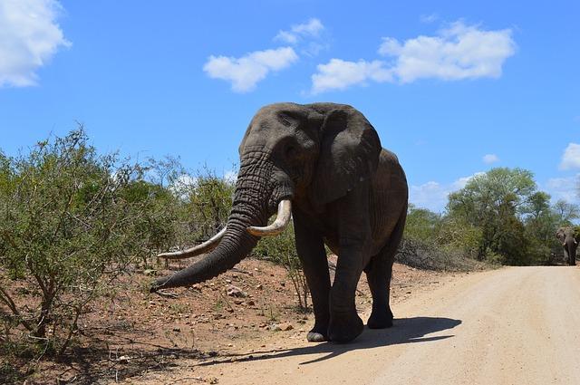 Slon v africkém parku