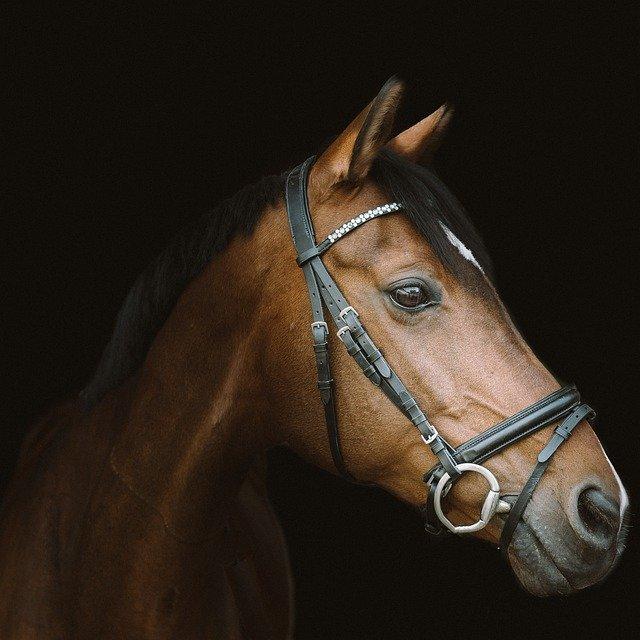 pomůcky pro koně